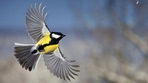 bird-170000 copy